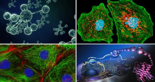 معرفی گروه زیست شناسی سلولی و مولکولی